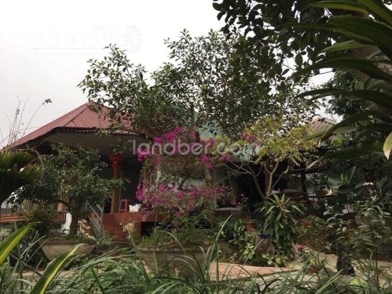 Nhà vườn 2 mặt tiền 1500m2 xã Thắng Quân, Tuyên Quang.