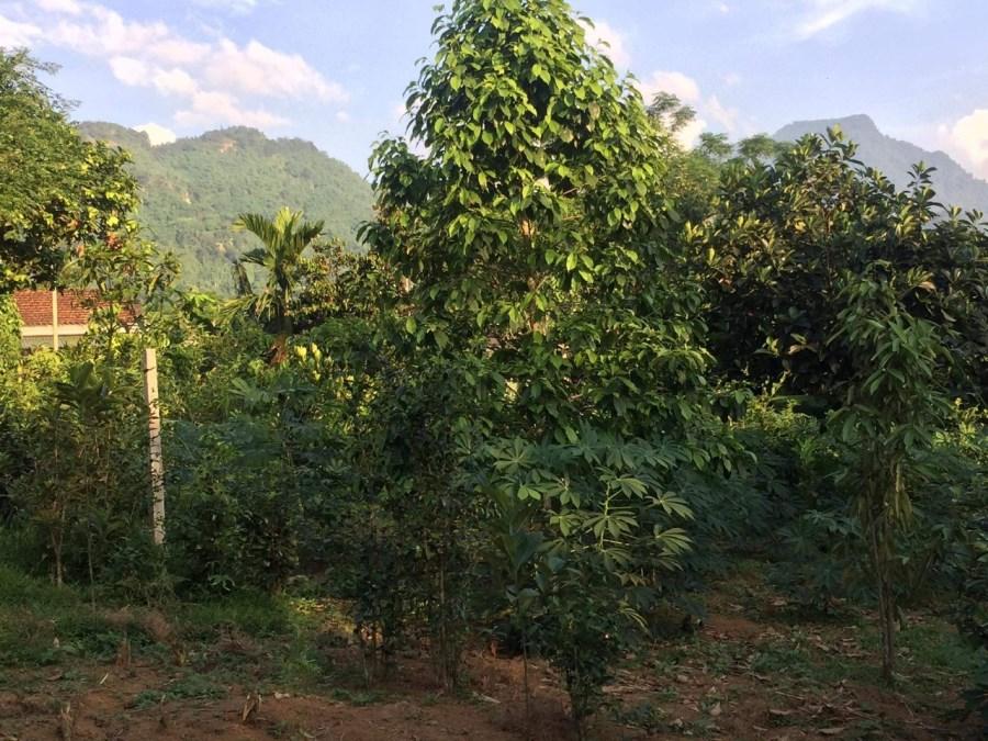 Bán gấp lô đất 1346,1m2 tại Xã Ba Trại, Ba Vì, Hà Nội.