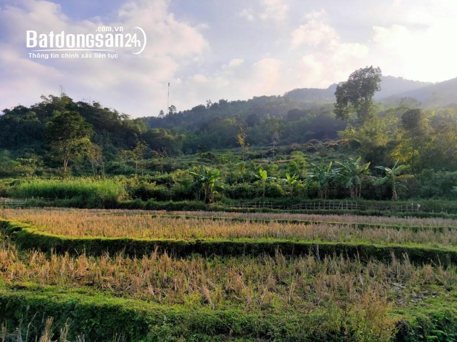Cần bán gấp 981m2 full thổ cư, view cánh đồng cực phẩm tại Kim Bôi