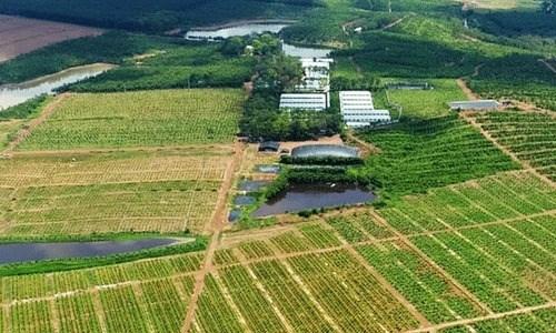 Sang nhượng gấp trang trại ở Nam Định