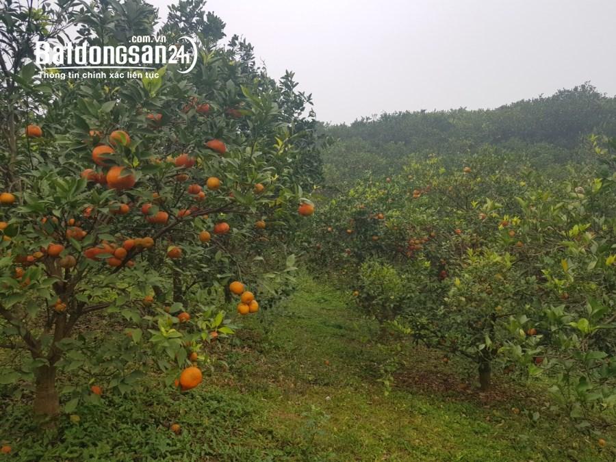 Bán đất Xã Bắc Phong, Huyện Cao Phong