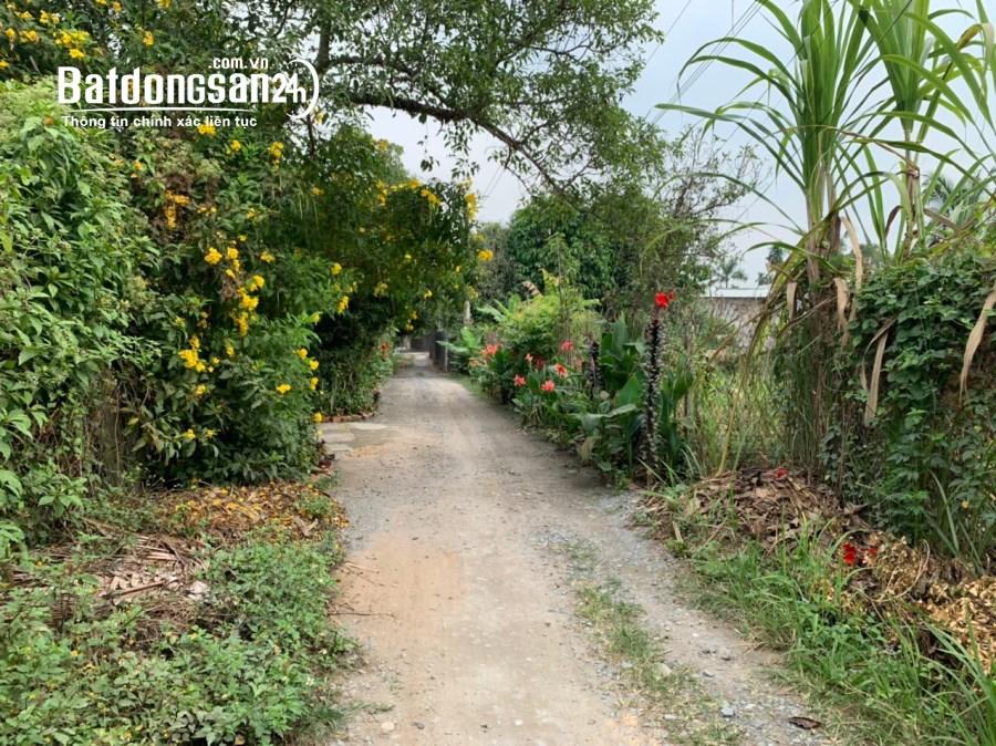 Vườn măng cụt 1000m2 tại Hưng Định, Thuận An, đường xe hơi oke
