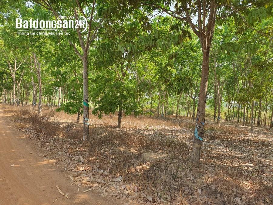 Bán 20 ha đất Tân Đức, Hàm Tân gần KCN Sonadzi giá tốt