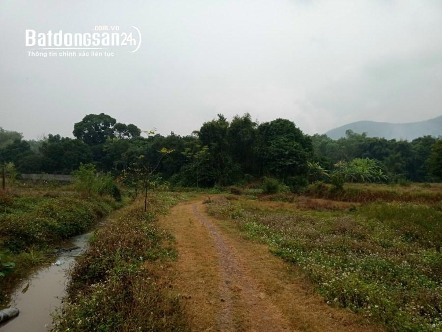 Chính chủ cần bán mảnh 1,2ha thuộc thị trấn Lương Sơn