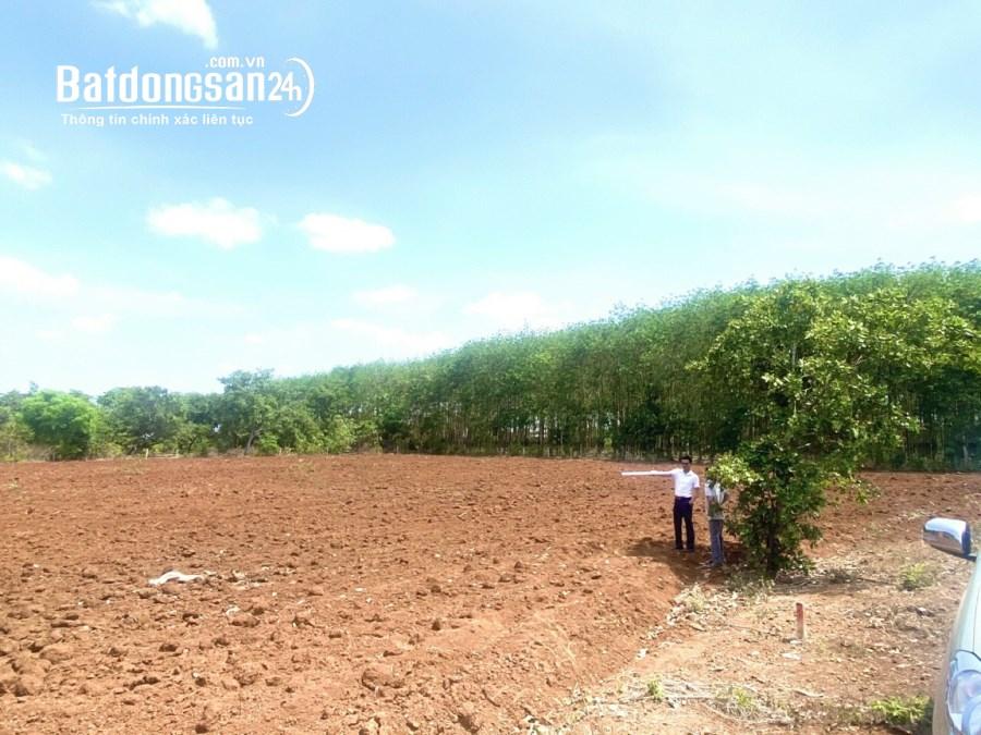 Mua đất riêng, Đất ở các loại Đường 14, Xã Lộc An, Huyện Long Thành
