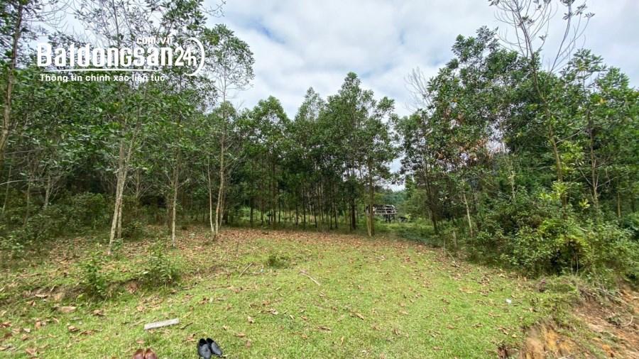 Tôi cần bán  24ha toàn bộ là đất rừng sản xuất (đã có sổ đỏ).giá gần 175tr/ha
