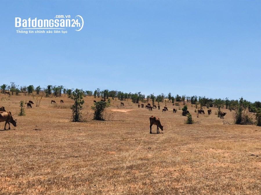 Bán đất vườn Binh Thuận 2 mặt tiền đường, cách liên huyện 775m giá 1 tỷ 55