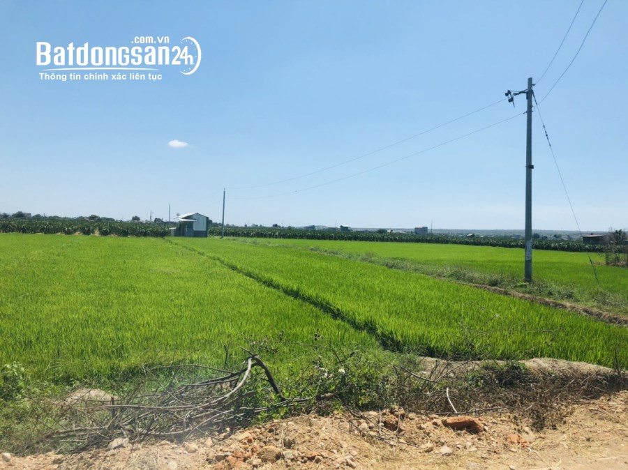 Bán đất vườn Bình Thuận cách khu dân cư 600m, giá 1 tỷ 6