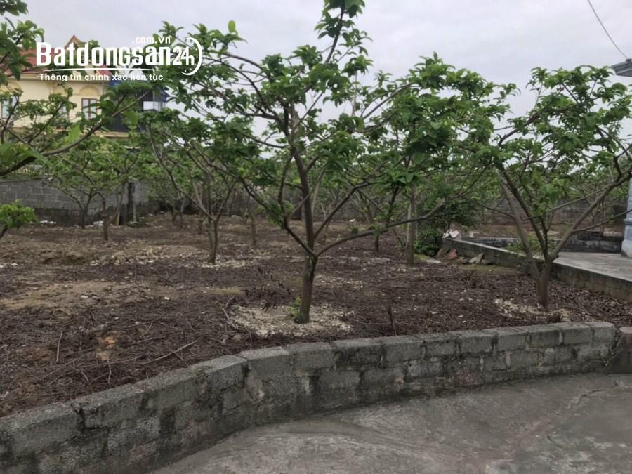 Bán đất Đường Liên Xã, Xã Lại Xuân, Huyện Thuỷ Nguyên