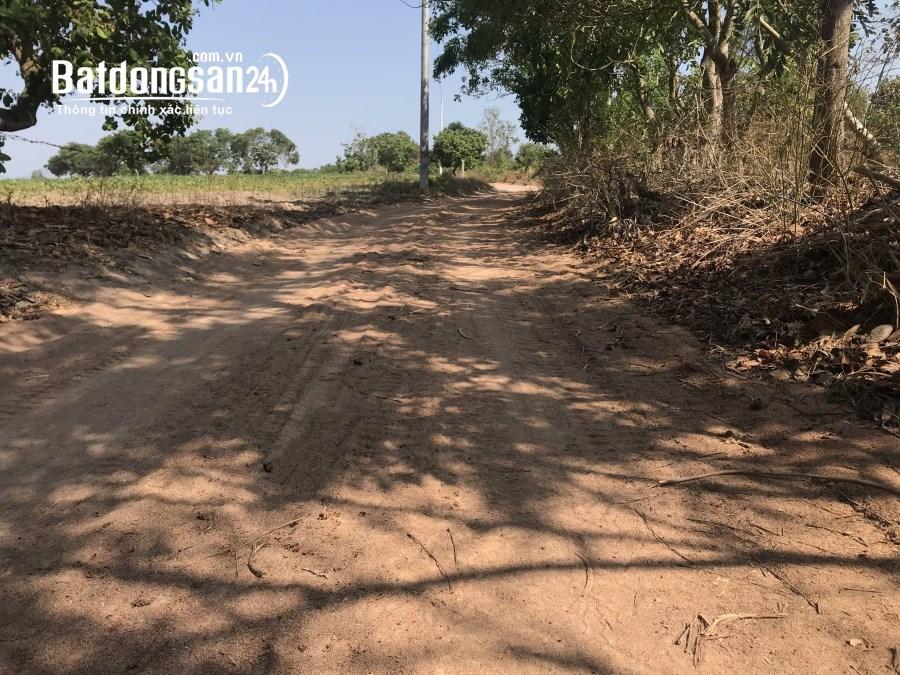 Bán 8.7 mẫu đất Tân Phúc, Hàm Tân chưa đầu tư