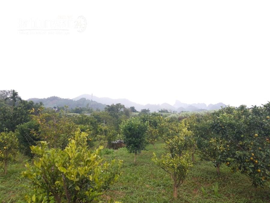 Bán đất Xã Đông Lai, Huyện Tân Lạc diện tích 964m2