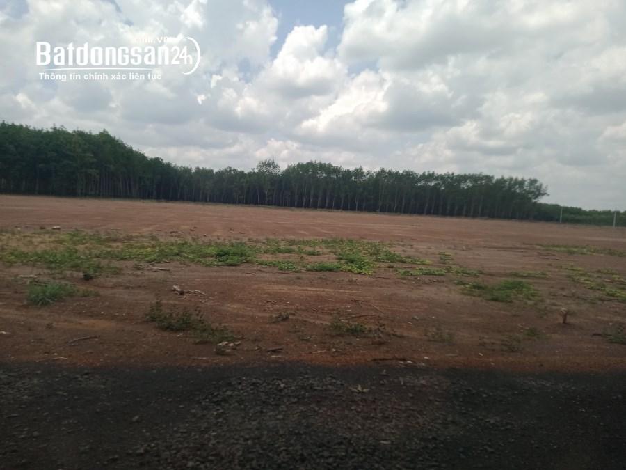 Bán đất Đường ĐT 741, Xã Đồng Tiến, Huyện Đồng Phú
