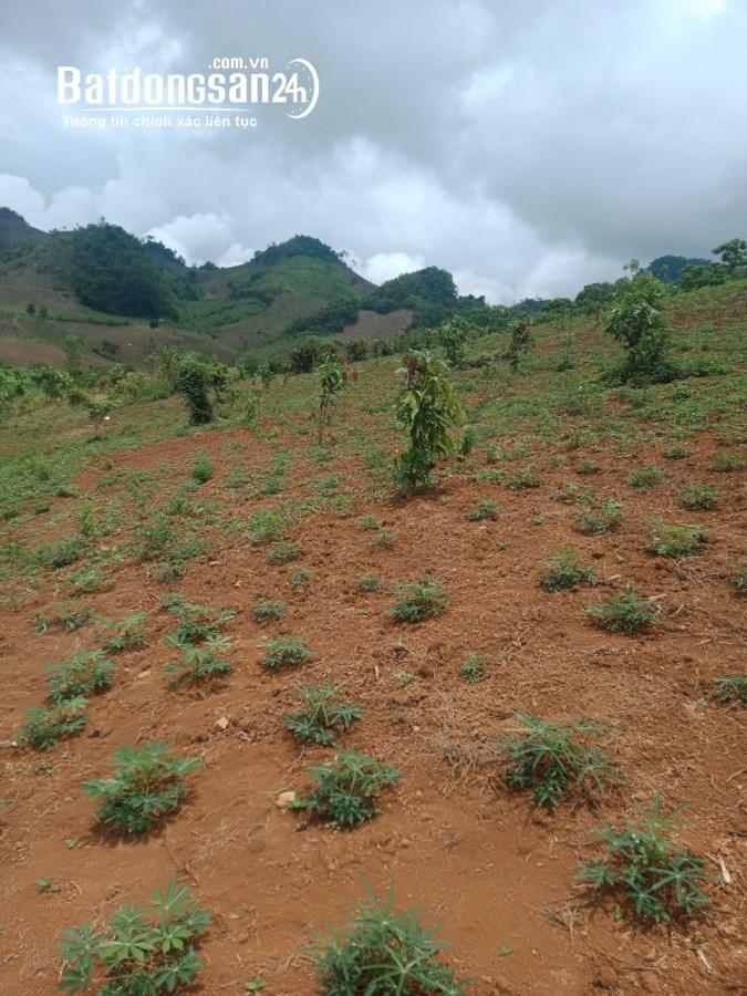Đất làm trang trại giá rẻ tại Vân Hồ - Mộc Châu giá chỉ 7xx