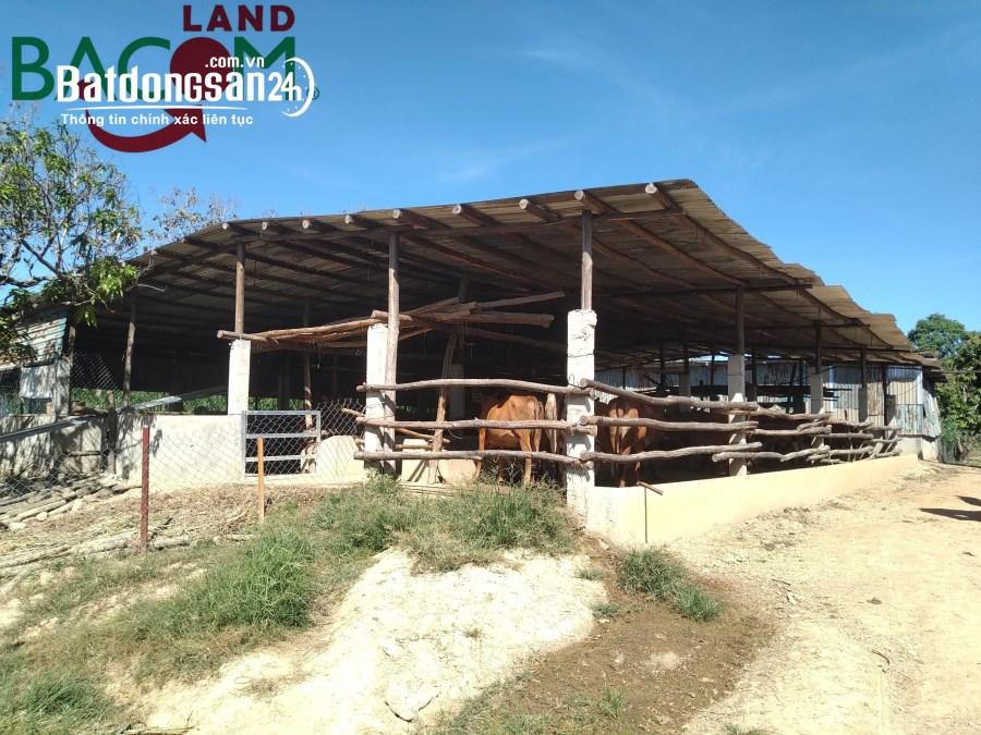 Cần bán hoặc cho thuê trang trại tại ấp 5 xã Thanh Sơn, Định Quán