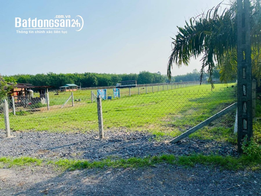 Bán lô đất vườn Củ Chi DT 537m2 giá rẻ 1ty254 SHR, cách MT đường nhựa Ba Sa 100